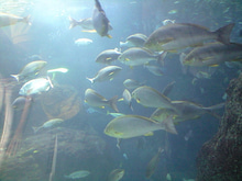 エドのおちゃめなニョッキ-江ノ島水族館