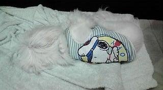動物病院居候犬ハッチの日々-電池切れ2