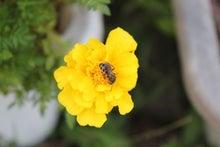 あの空を-ミツバチ