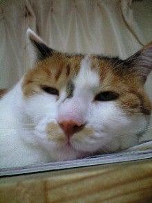 一日三色 ~三色猫みぃ~-100918_2226~0002.jpg