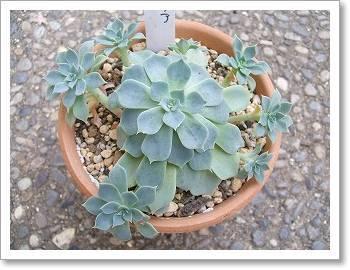 Bonheur~「日々の生活のエッセンス」多肉植物、いろんな植物、空、etc・・・~