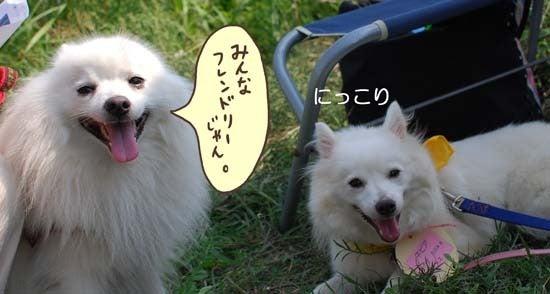 犬とモルと私達