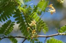 小笠原エコツアー 父島エコツアー         小笠原の旅情報と小笠原の自然を紹介します-タマリンド