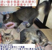 ぽんたくんの付゛録゛-迷い猫