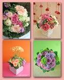 Flower Supplement-gift添付用