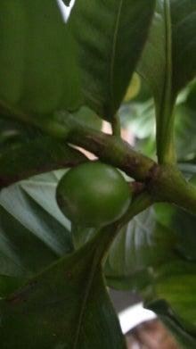 $++COFFEE TREE++ ★宮崎発!!自家焙煎珈琲店主のコーヒーブログ★