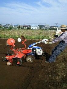 $nicoブログ  自家採種のすすめ  -小松菜畝立て