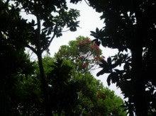 小笠原エコツアー 父島エコツアー         小笠原の旅情報と小笠原の自然を紹介します-ムニンフトモモ