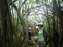 小笠原エコツアー 父島エコツアー         小笠原の旅情報と小笠原の自然を紹介します-9.23