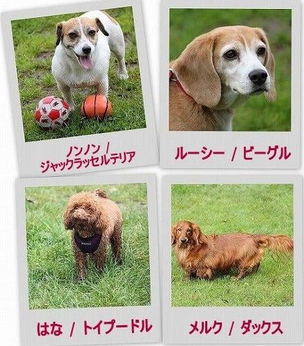 ザ☆ビーグルズ エディ&ルーシー-0928-2