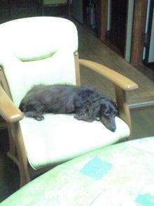 犬太郎が来た!-CA3A0607.JPG