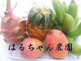 はるちゃん農園のブログ