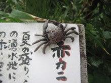 ぽれぽれカエルが雨に鳴く-kozu08