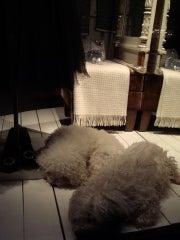 怒れる小さな茶色い犬-100930e