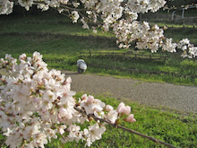 大淀町nanaのブログ-福神中央公園