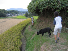 歩き人ふみの徒歩世界旅行 日本・台湾編-犬の散歩