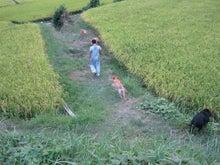 歩き人ふみの徒歩世界旅行 日本・台湾編-4匹の犬達と