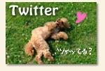 ●トイプードル ニコとビンのブログ♪