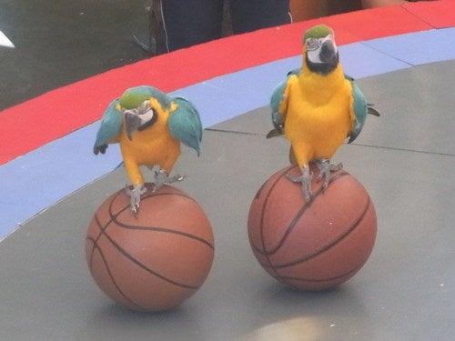 中国大連生活・観光旅行通信**-老虎灘 鳥語園 鳥のショー