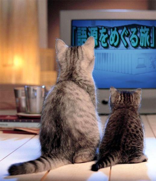 $語源遺産-猫に語源