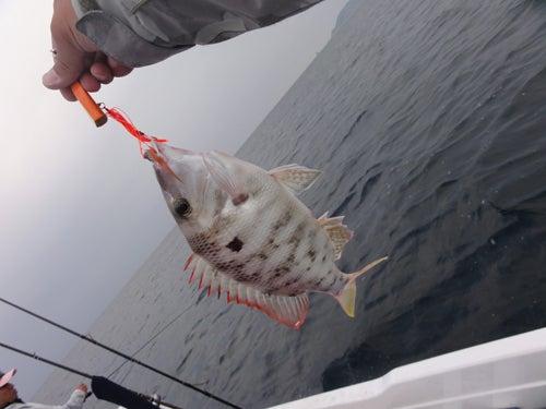 D_Groove Blog/No Fishing No Life.-16