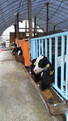北海道士別市 newmfdfarmのブログ-子供たちに伝えたい、いきることとは?!-20101003073532.jpg