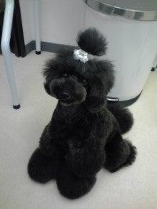$DOG SALON A-ROOM-101005_1547~02.jpg