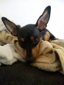 我が家のアイドル犬☆テディくんの日記-可愛いフリスペ