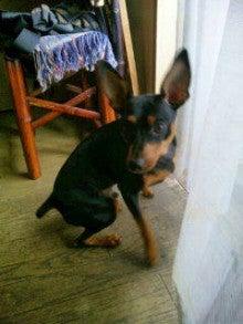 我が家のアイドル犬☆テディくんの日記