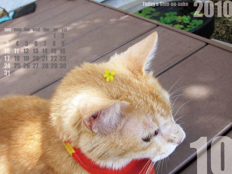 今日の新之介 ~癒し系オヤジ猫~-花が咲いた!