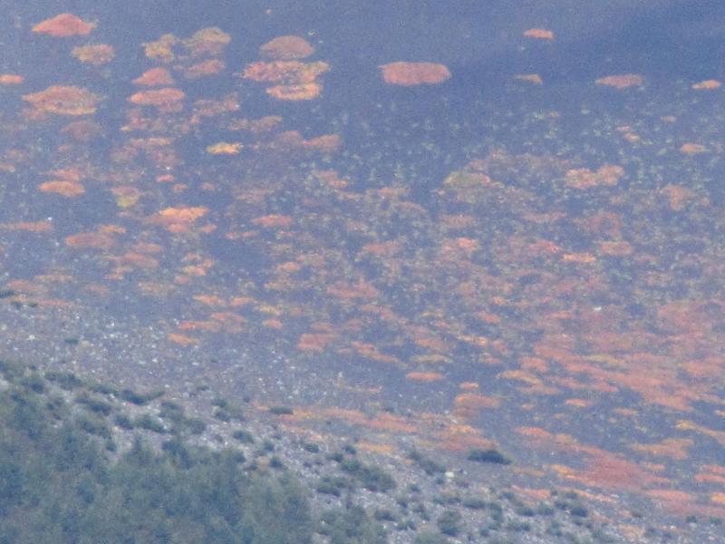 富士山 高山植物の群生の紅葉