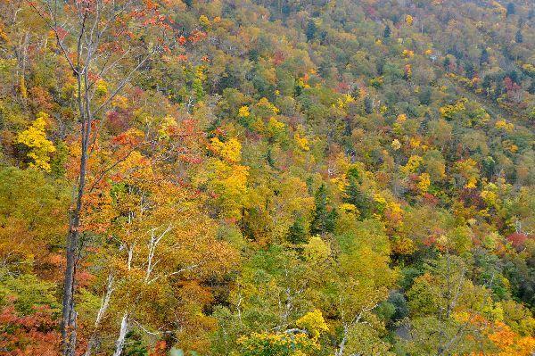 北海道の野生動植物写真-手稲山