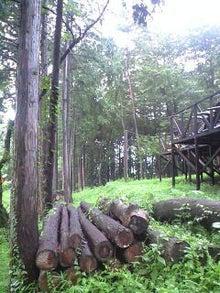 RYUZU【リューズ】ブログ-思索の森