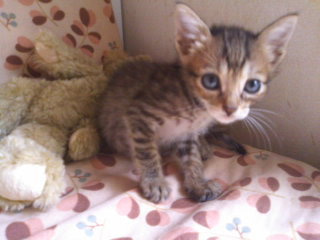 猫にSweets-101010_1216~01.jpg