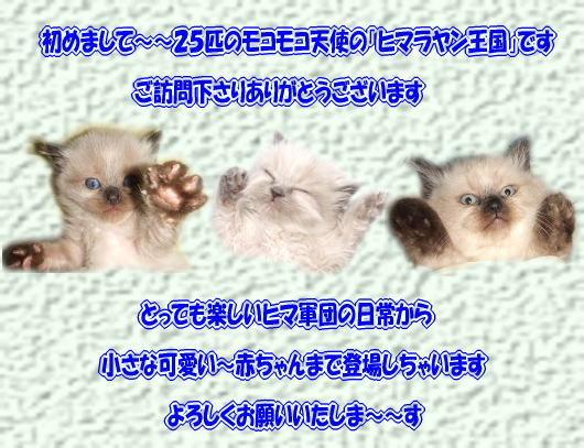 $ヒ マ ラ ヤ ン 王 国-oukoku.top