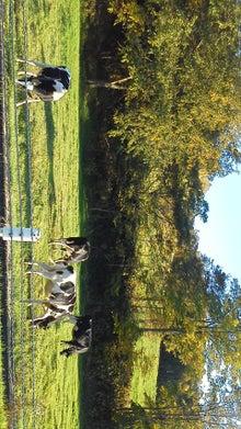 北海道士別市 newmfdfarmのブログ-子供たちに伝えたい、いきることとは?!-20101008153401.jpg