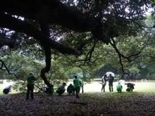 緑化推進事業の活動報告-101009スダジイの巨木