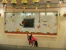 目指せ!!カリスマトリマ-@Dog&Cafe WITH-SBSH02861.JPG