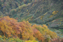 白神山地ツアーで能代山本地区の活性化すっぺ-2010年10月16日の藤里駒ケ岳10