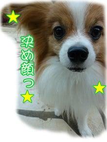 犬っちのブログ-ru-ku2