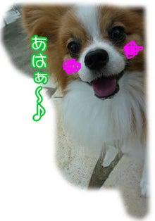 犬っちのブログ-ru-ku3