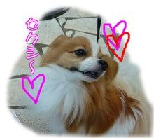 犬っちのブログ-ru-ku4