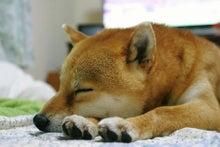 快眠飛行士♪ の 「睡眠知識を学ぼう!」