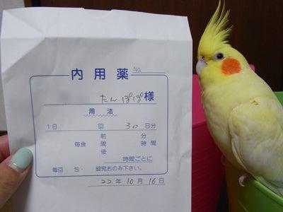 【たんぽぽの惑星】-たんぽぽ1010810