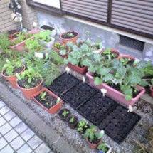 庭の整理整頓
