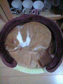 ずれずれブログ…湘南で猫と暮らせば…-101021_0743~0001.jpg
