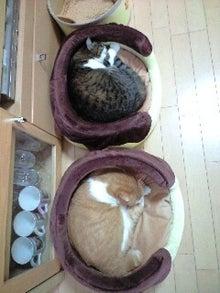 ずれずれブログ…湘南で猫と暮らせば…-101021_0831~0001.jpg