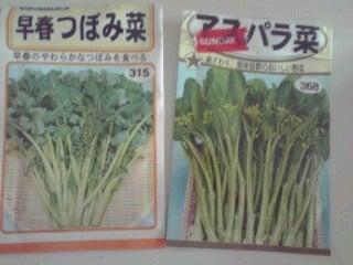 けいとだまのド素人家庭菜園 ただいま冬ごもり中-101021_0925~01.jpg