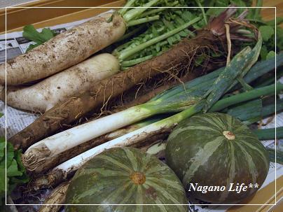 Nagano Life**-野菜収獲