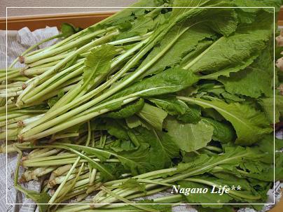 Nagano Life**-野沢菜